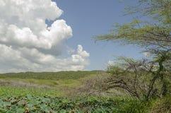 L'eau Lily Field, terre plate et ciel photo libre de droits