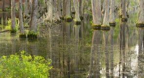 L'eau lisse reflète des arbres de Cypress dans le marais Marsh Lake images stock