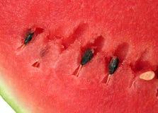 l'eau mûre de melon Photos libres de droits