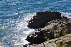 L'eau, mousse de mer et roches Photographie stock libre de droits