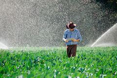 L'eau numérique de système d'arrosage de chapeau de technologie de plantation de tablette de contrôle de travailleur du soleil d' photo libre de droits