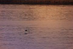 L'eau onduleuse du fond de mer, Dubaï, EAU le 21 juillet 2017 Images stock