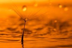 L'eau orageuse Photos libres de droits