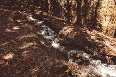 L'eau orageuse d'une rivière au foyer sélectif de forêt toned Images stock