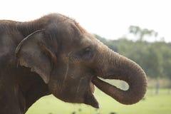 l'eau potable d'éléphant Photos stock