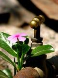 L'eau pour l'accroissement Image libre de droits