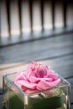 L'eau rose lilly Photo libre de droits