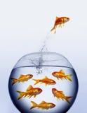l'eau sautante de goldfish photographie stock