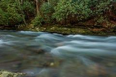 L'eau se précipitant après des arbres de rhododendron Image libre de droits