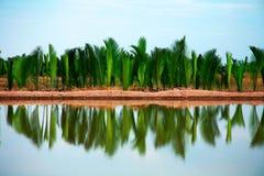 l'eau se reflétante de palmiers Images stock