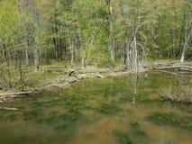 L'eau sombre ou boueuse dans le lac ou l'?tang avec des algues et des usines images libres de droits