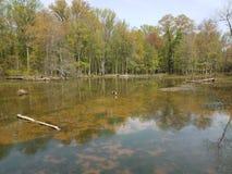 L'eau sombre ou boueuse dans le lac ou l'?tang avec des algues et des usines et oie photo libre de droits