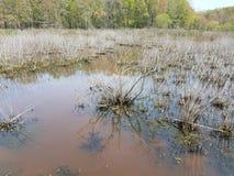 L'eau sombre ou boueuse dans le lac ou l'?tang avec des algues et des usines image libre de droits