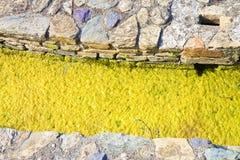 L'eau stagnante avec des pierres émergeant sur la surface Photographie stock libre de droits