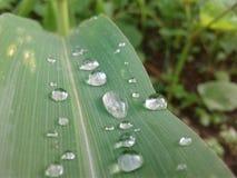 L'eau sur des feuilles photos libres de droits