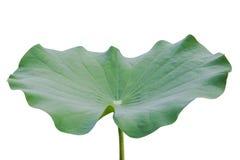 L'eau sur la feuille de lotus Photo stock