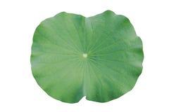 L'eau sur la feuille de lotus Image stock