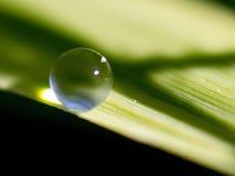 L'eau sur la lame de l'herbe Images libres de droits