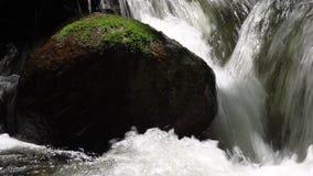 L'eau tombant dans Moss Covered Woodland Stream