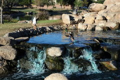 L'eau tombe en Arizona Images libres de droits