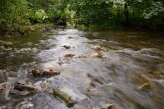 L'eau traversant des bois Image stock