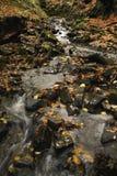 L'eau traversant des bois Images stock