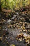 L'eau traversant des bois Image libre de droits