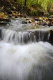 L'eau traversant des bois Photo stock