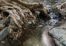 L'eau traversant des racines d'arbre Images libres de droits