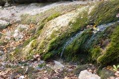 L'eau traversant la mousse sur la pierre Images stock