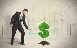 L'eau étudiante à fond d'homme d'affaires sur l'arbre du dollar se connectent le fond de ville Images stock