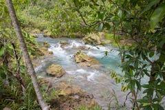 L'eau vert d'émeraude à la forêt de marais de tourbe du canal de Tha Pom dans la province de Krabi, Thaïlande du sud Photographie stock libre de droits