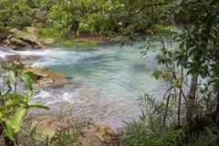 L'eau vert d'émeraude à la forêt de marais de tourbe du canal de Tha Pom dans la province de Krabi, Thaïlande du sud Image libre de droits
