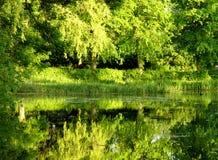 l'eau verte Images stock