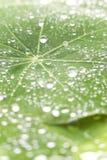L'eau verte de feuille laisse tomber le fond Photographie stock