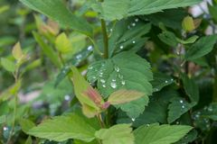 l'eau verte de lame de baisses images stock