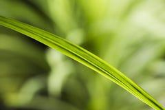 l'eau verte de lame de baisse Image libre de droits