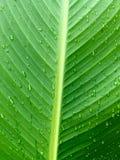 l'eau verte de lame de baisses Image libre de droits
