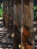 L'economia del legno dell'albero della gomma della Tailandia che crea il reddito e la qualità della vita degli agricoltori di gom Fotografia Stock