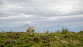 L'Ecosse Skye Island photos libres de droits