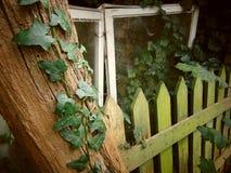 L'edera che scala su un vecchio albero con con muschio ha coperto il recinto Immagine Stock