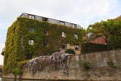 L'edera mura uno degli istituti universitari. Cambridge. Il Regno Unito. Fotografie Stock Libere da Diritti