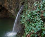 L'edera pianta circondare il vecchio mulino a acqua Immagini Stock Libere da Diritti