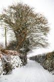 L'effet de la bête de la tempête est de neige d'hiver dans Drews image stock