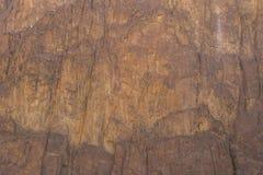 L'Egitto, le montagne del Sinai abbandona, canyon colorato Immagini Stock Libere da Diritti