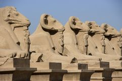 l'Egypte antique, avenue des sphinx, course photos stock