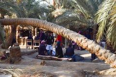 L'Egypte, oasis de Siwa, côté de mer, Sun a placé, des arbres photo stock