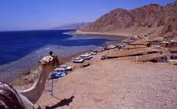 L'Egypte : Un chameau donnant sur la tache de plongée de trou bleu près de Dahab dans le désert de Sinai photographie stock libre de droits