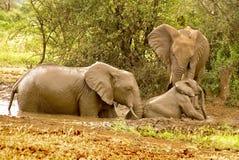 L'elefante del bambino ha bisogno della guida Fotografia Stock Libera da Diritti