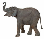 L'elefante del bambino include il percorso di residuo della potatura meccanica Fotografia Stock Libera da Diritti